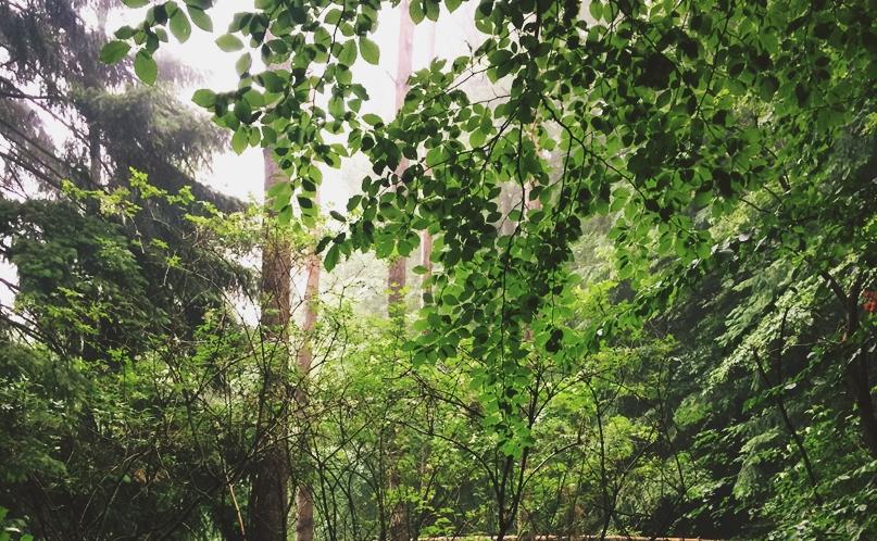 Waldaufforstung in Amöneburg