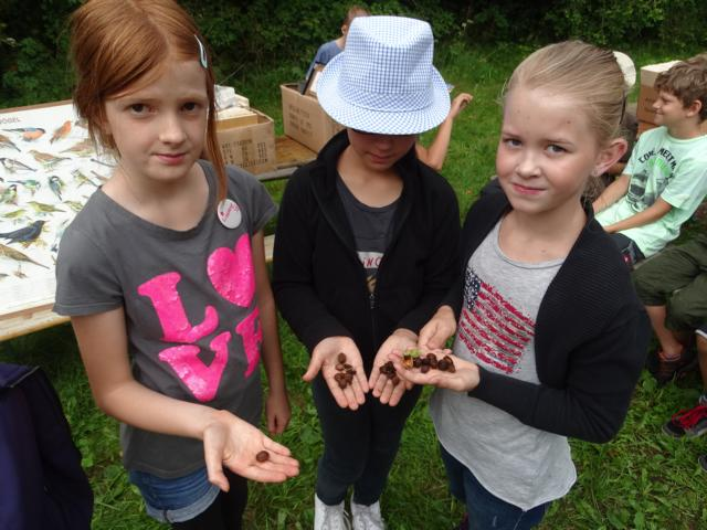 Die Kinder könnten Spuren der Haselmaus entdeckt haben!