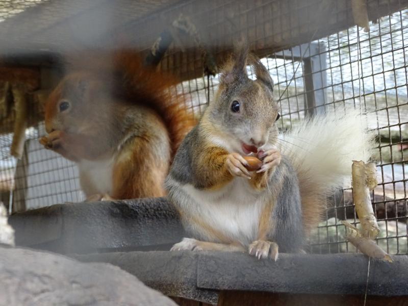 Ganz dicht saßen die Hörnchen bei den Kindern und knabberten an ihren Nüssen.