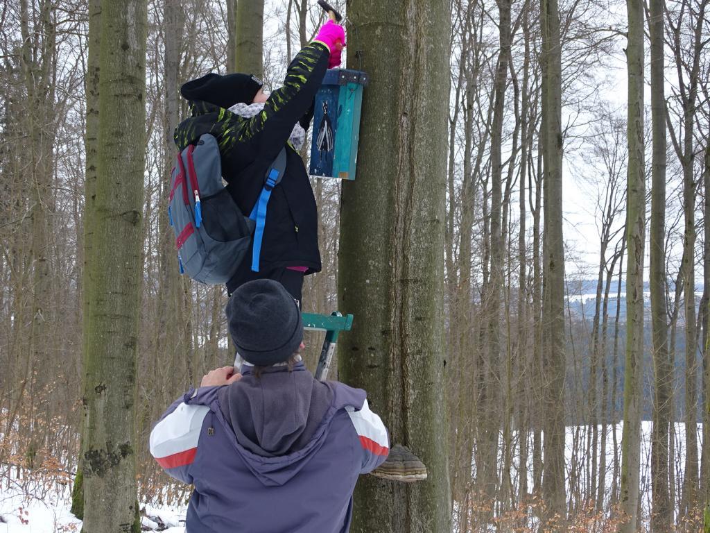 Es wurden nicht nur drei Nistkästen, sondern auch zwei Fledermauskästen aufgehängt.