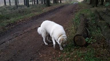 Enya untersucht Baumstämme...
