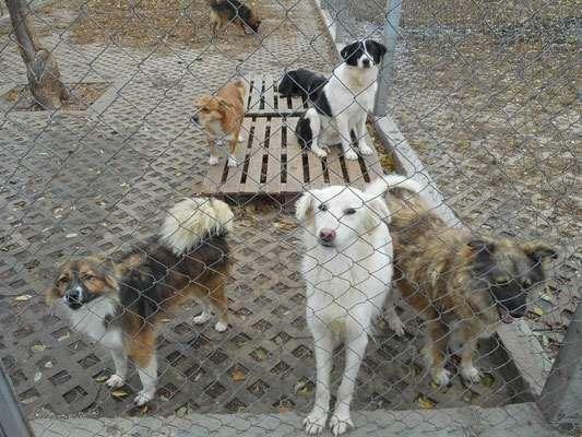 Calla, Yola, Britti (vorne) und Liza und Tabea (hinten)