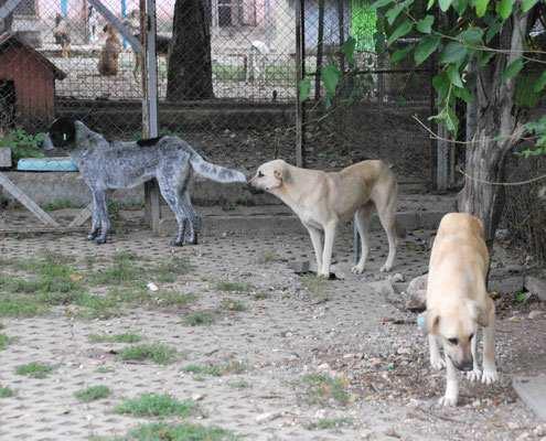 Camilla vorne, dahinter Cora und Bruno
