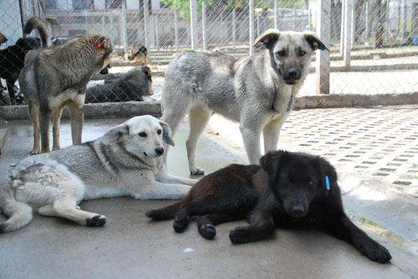Randi (links) mit ihren Brüdern Riko und Rudi (vorne)