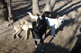 Kila mit Lester (rechts)