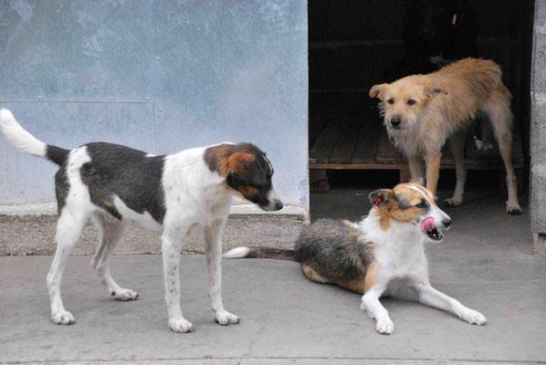 Zak, Chloe und Sadi