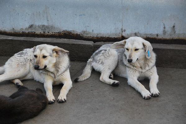 Rana und Randi (rechts)