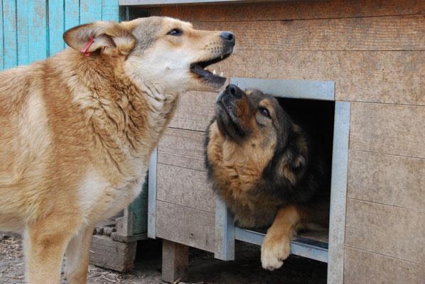 Roo mit Romeo
