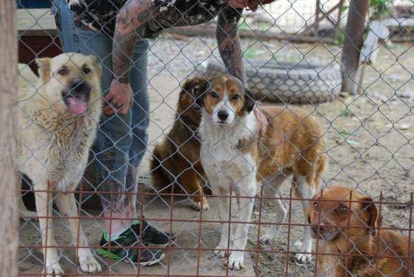 Browny mit Conan (links) und Nani (Mitte)