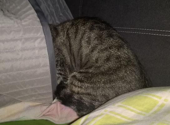 Tom schläft in der ersten Nacht schon mit im Bett