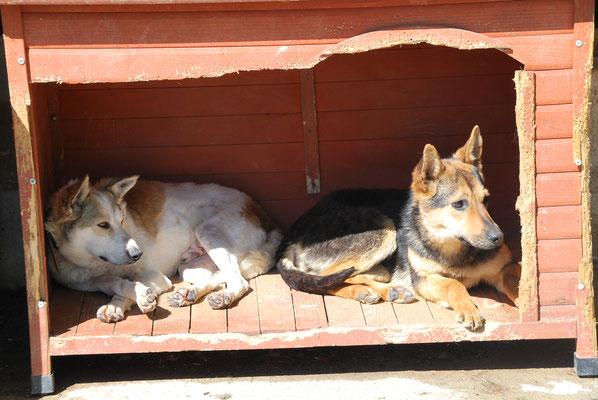 Uschko teilt mit Kira die Hütte