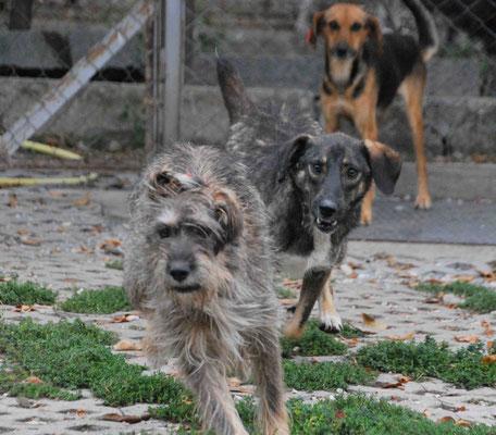 Spielstunde: Cari, Dorle und Mimi