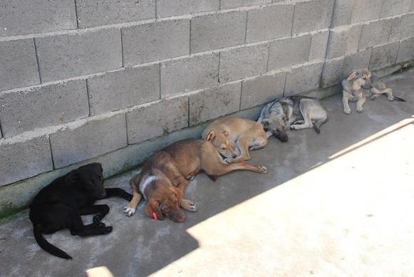 Rudi, Leni, Roo, Riko und Rana