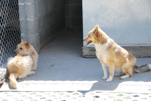 Sadi und Felice