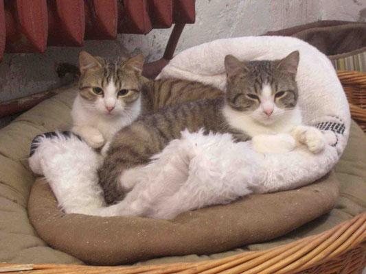 Otis (vorne) mit Lenny