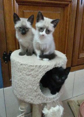 Bao, Benita und Bora