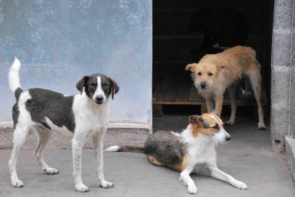 Zak mit Sadi und Chloe