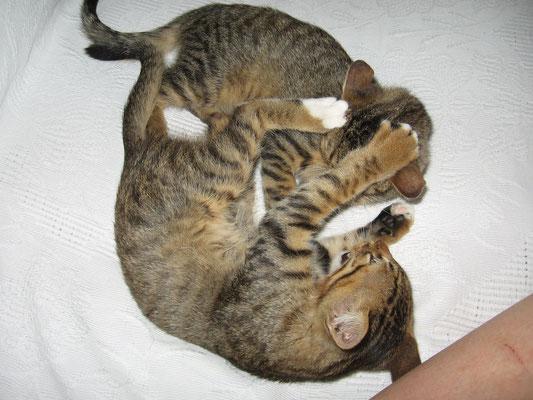 Simba mit Chiko (unten)