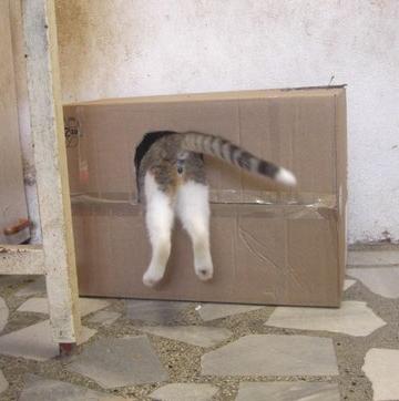 Otis springt in sein neues Häuschen