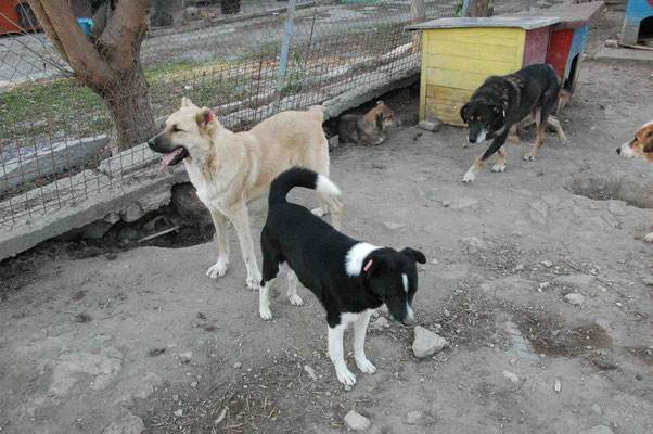 Ivan (hinten) mit Conan und Sheela