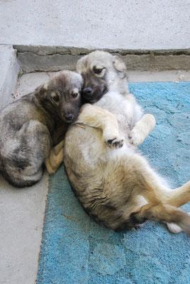Mila mit ihrem großen Bruder Miro