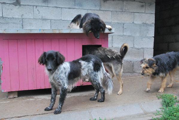 Lukey und Carlos auf der Hütte