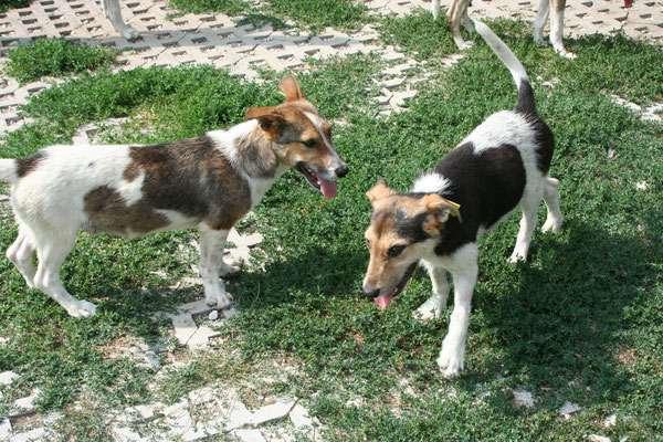 Giso und Goran