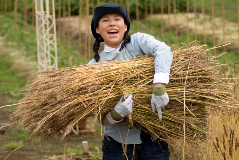 小麦の収穫その2