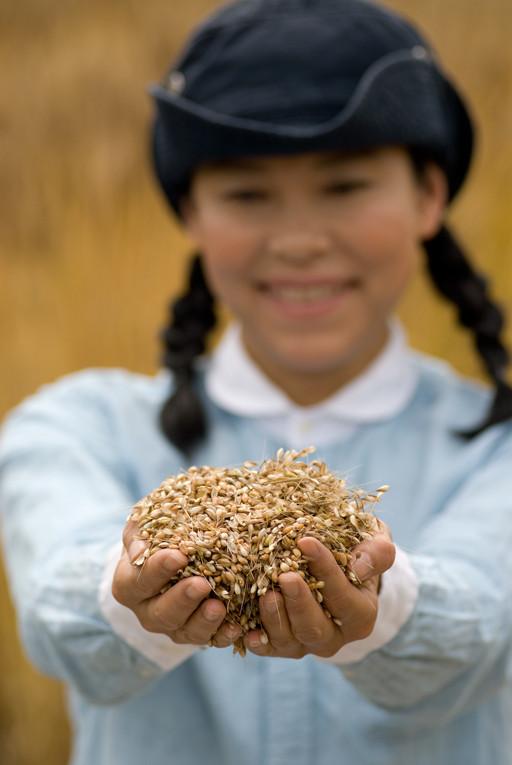 小麦の収穫その3