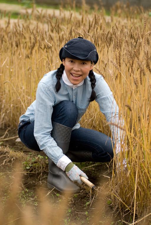 小麦の収穫その1