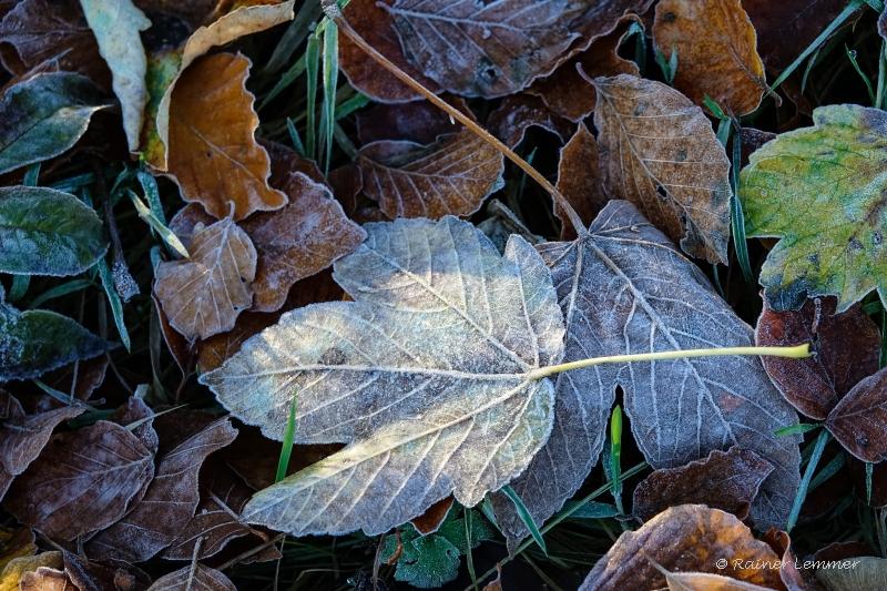Rauhreif Blätter