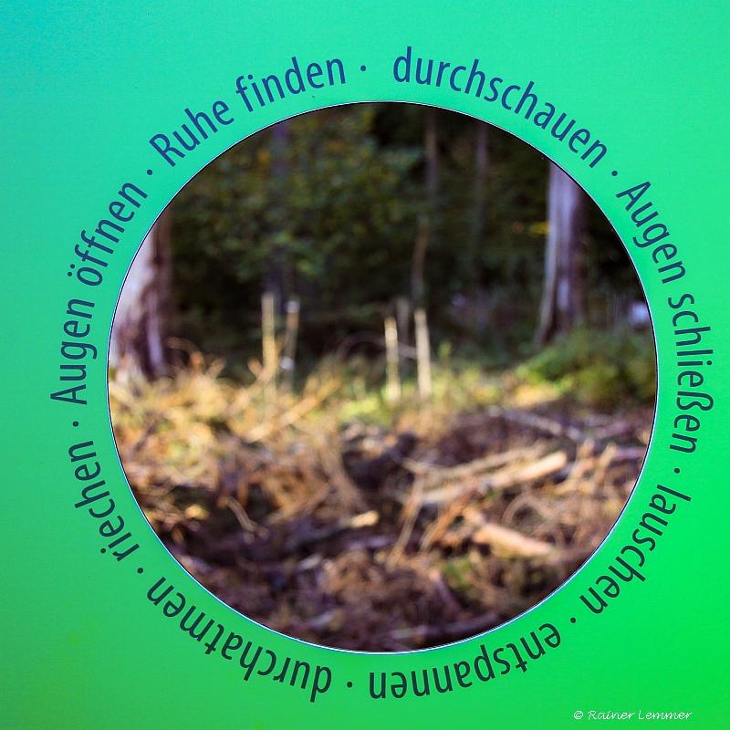 Multitalent Wald