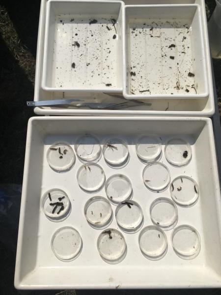 Makrozoobenthos - in der Nister
