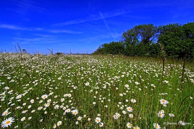 Blumenwiese im Westerwald
