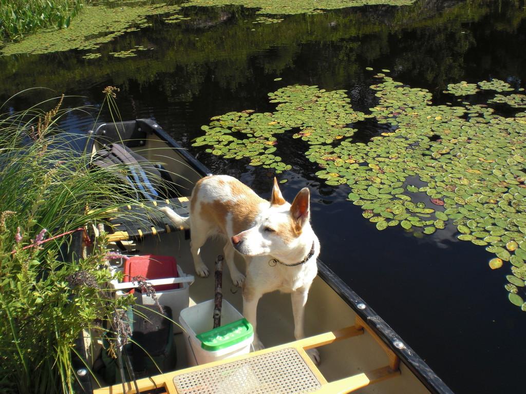 Moxy sitzt schon im Kanu