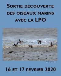 Sortie découverte des oiseaux marins