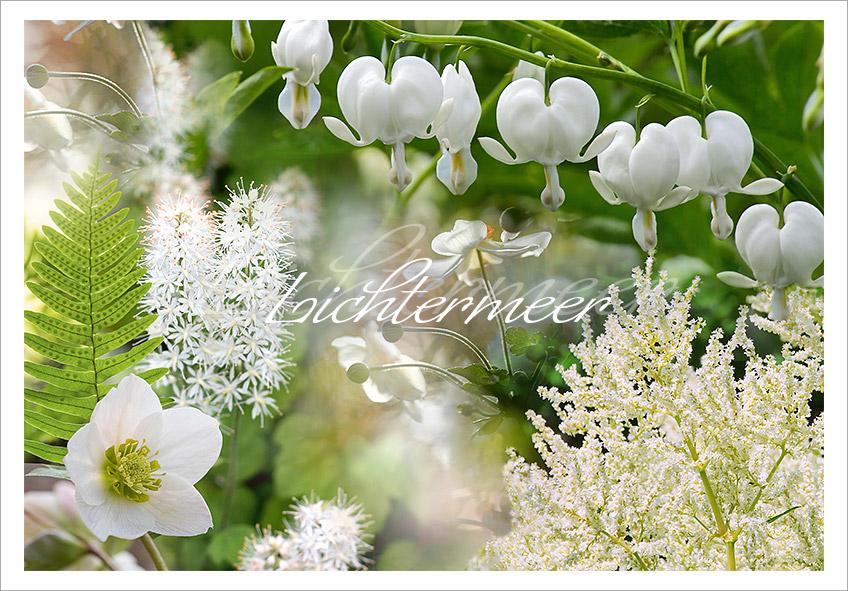 Gräber mit weiße Blüten im Schatten von Bäumen