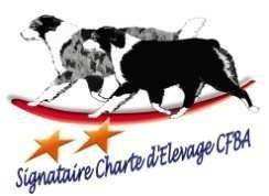 Elevage berger australien signataire charte d'élevage CFBA