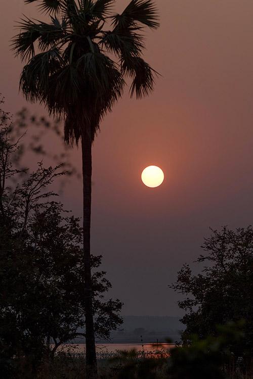 Coucher de soleil - Tadoba Andhari Tiger Reserve