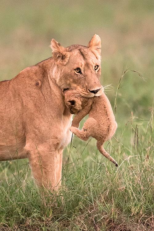 Maasai Mara: Portage
