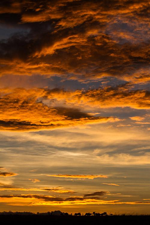 Maasai Mara: coucher de soleil