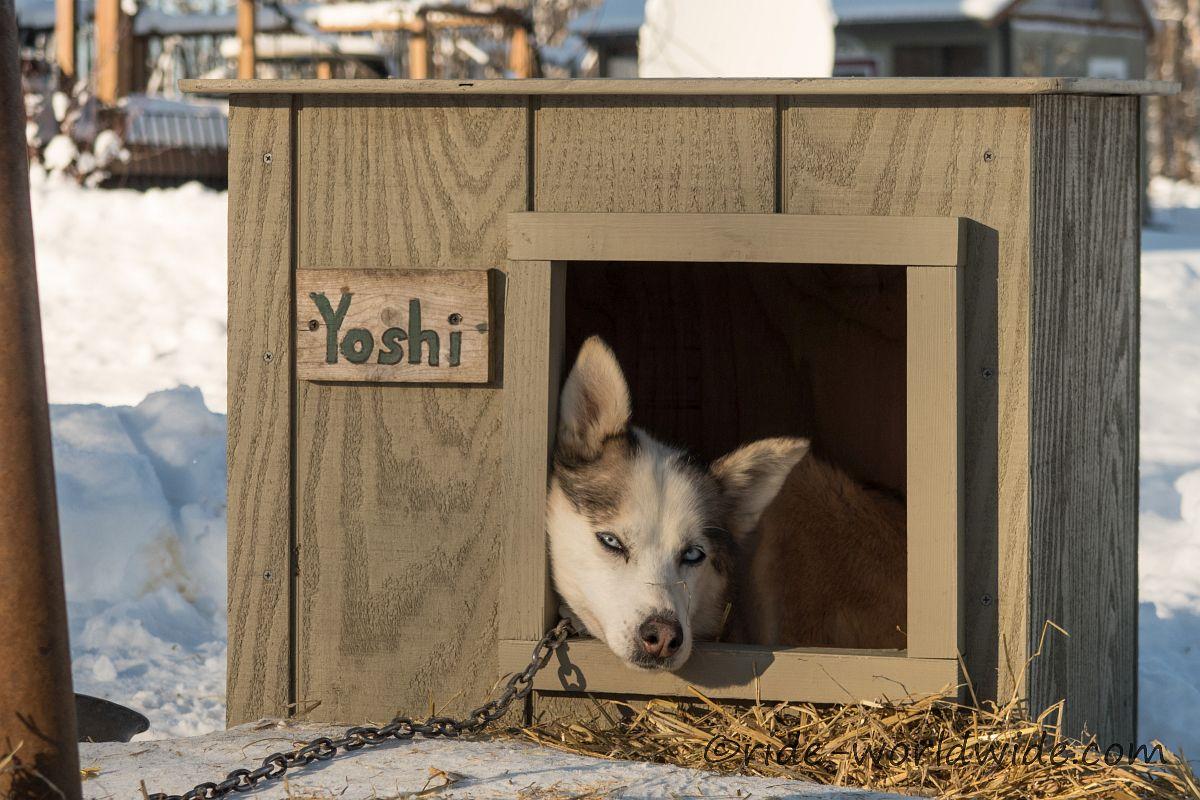 Yoshi glücklich und zufrieden in ihrer neuen Hütte