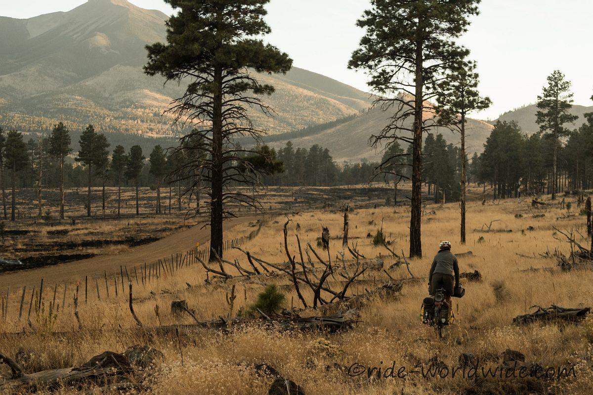Kontrollierte Waldbrände auf dem Weg zu Flagstaff