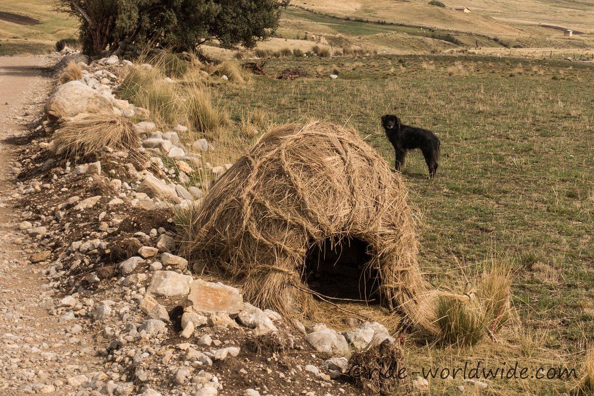 Hundehütte auf peruanisch