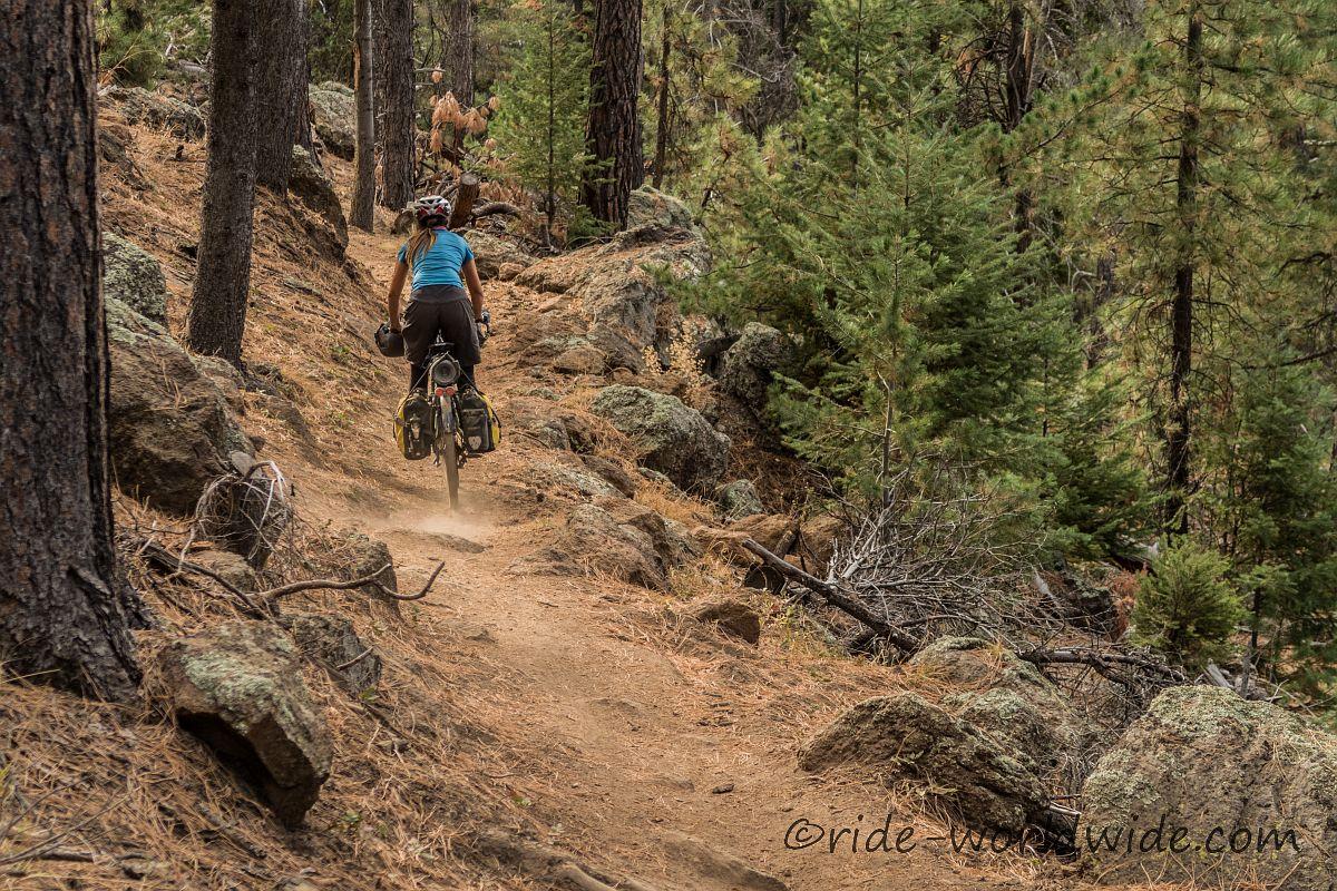 Singeltrail bei Flagstaff