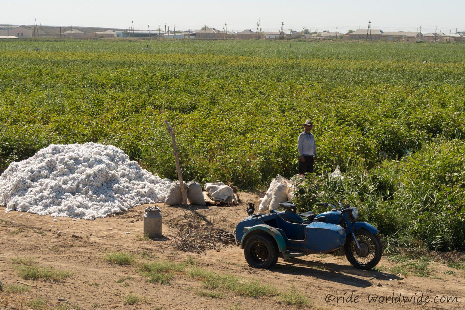 Baumwollernte ist im vollem Gange
