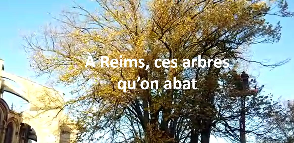 À Reims, ces arbres qu'on abat