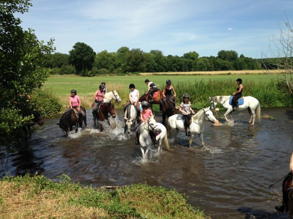 15 cavaliers ravis de leur promenade dans l'eau!