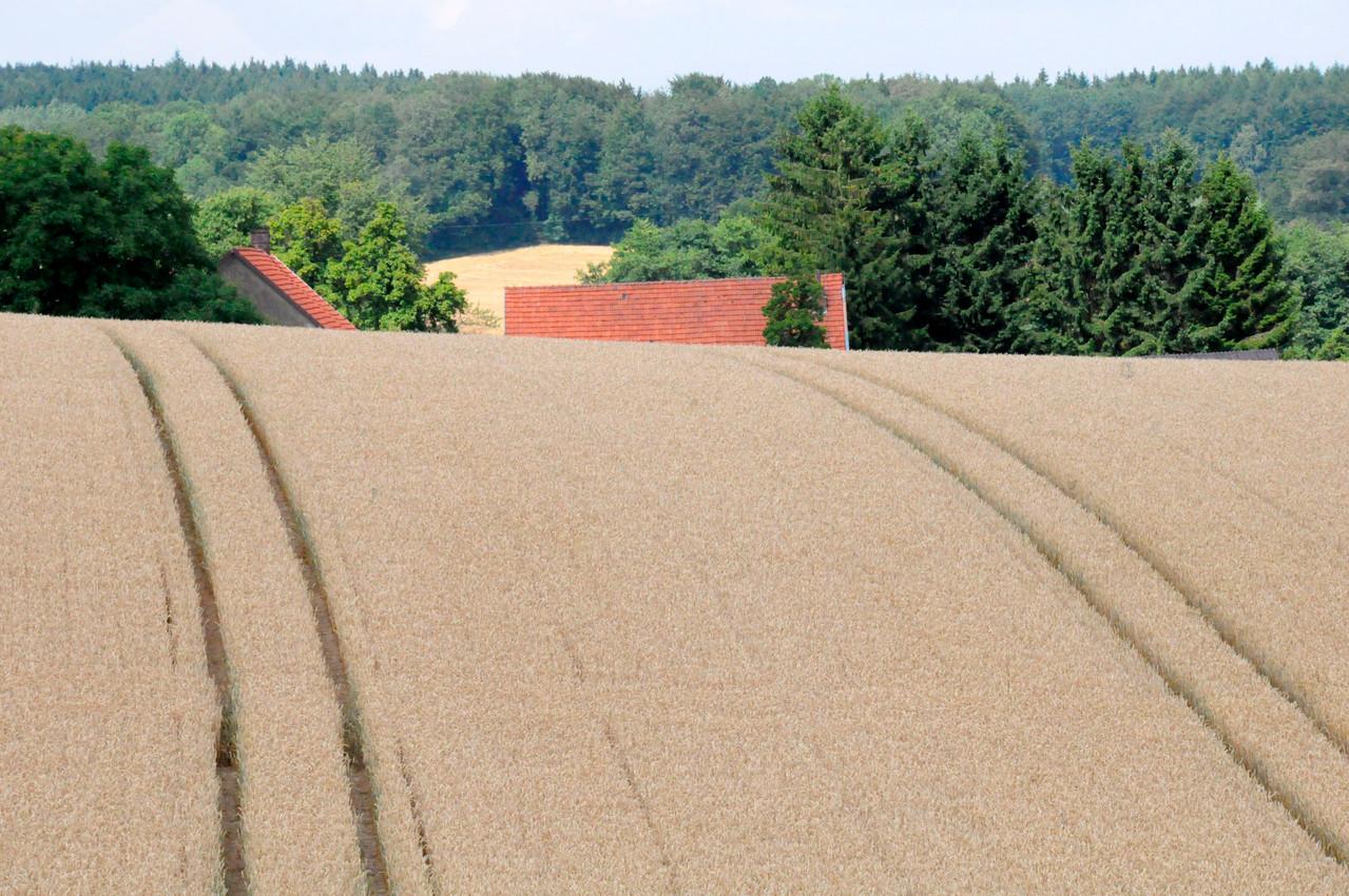 Borgholzhausen NRW, Juli 2010