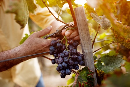 Das Gleichnis von den Weingärtnern